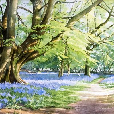 beech_tree_bluebells_web_cropped